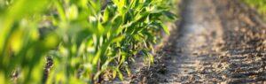 Planten op een akker - Carbon farming